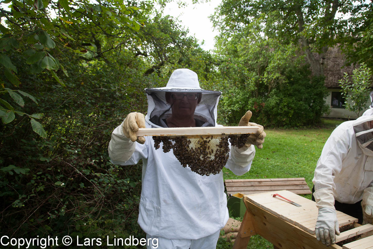 Honungsbiets Dag